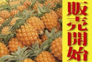 送料無料!ちぎって食べるパイナップル!ちぎって食べる芯まで食べる! 甘さたっぷりジューシーな味わい! 沖縄産スナックパイン約4kg(4〜6個)【沖縄】20140530_パインチルド便込み