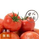 予約販売 11月上中旬より順次発送予定 約1kg 送料無料 【おまけ付き】 トマト プレゼント 安心安全 農家直送 ハウス桃…