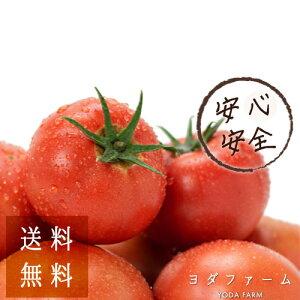 送料無料 トマト 約2kg 安心安全 農家直販 ハウス桃太郎トマト ヨダファーム 樹上完熟 採れたてを発送 ラッピング お歳暮 トマトランキング1位 ジュース ピューレ 鍋 ソース にもおすすめ 12/1