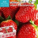いちご ミガキイチゴ レギュラー 2パック(2パック/1箱) 宮城県 送料無料 産地直送【イチゴ/苺/ストロベリー/お取り…