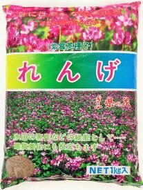 レンゲ種子 1kg 送料無料【2020年産】れんげ草のたね