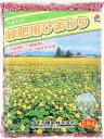 【4袋セット】ひまわり種子 緑肥用ひまわり 2kg(500g×4袋)セット タキイ種苗 ひまわりの種