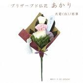 プリザーブド仏花あかり大菊(白)/若草
