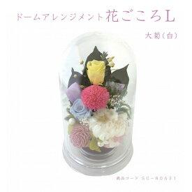 ドームアレンジメント花ごころL/大菊(白)そのまま生けられる 仏花アレンジメント お仏壇 お供え 花材 お盆 お彼岸