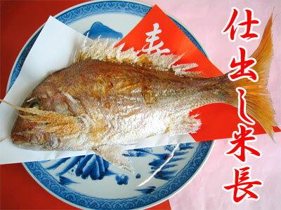 【送料無料】【祝い鯛】1.5kgサイズ用祝い事にはかかせない結婚式や100日のお祝いなどに焼き鯛/祝鯛があれば華やかになる!瀬戸内の明石から直送です!【約1.5kgサイズの生活け鯛を使用】