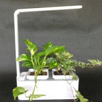 観葉植物を植えてインテリアとして