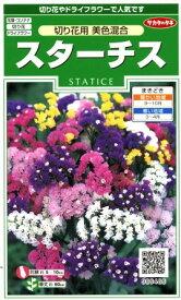 【スターチス】切り花用 美色混合【サカタのタネ】(0.3ml)【耐寒性一年草】[秋まき]906486【RCP】