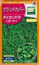 【ダイコンドラ】ダイカンドラ(コート)【タキイ種苗】(20ml)グランドカバーに/ディコンドラ/ディカンドラ[春まき]…