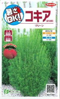 【グリーン】コキア(ほうき草)サカタのタネ