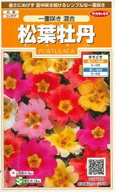 【松葉牡丹】一重咲き 混合【サカタのタネ】(0.1ml)マツバボタン[春まき]一年草907610