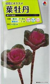 【葉牡丹の種】 瀬戸の舞姫【タキイ交配】(0.5ml)ハボタン