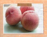 【果樹苗】もも【はなよめ】(PVP)【落葉果樹】