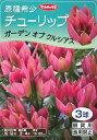 【サカタの秋植え球根】原種系チューリップ ガーデンオブクルシアス(3球詰)【RCP】