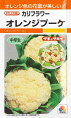 オレンジドーム(オレンジブーケ)〜タキイ交配