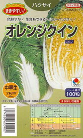 【ハクサイ】オレンジクイン(ペレット種子/100粒) 【タキイ交配】野菜種/タキイ種苗[秋まき]
