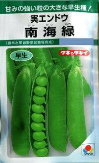 【実エンドウ】南海緑【タキイ種苗】野菜種