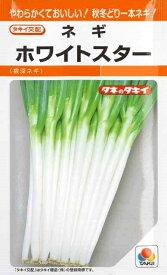 【根深ネギ】ホワイトスター 【タキイ種苗】(5ml)野菜種/葱[春まき][秋まき]RF