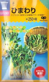 【スプラウト】ひまわり【中原採種場】(50ml)野菜種【RCP】