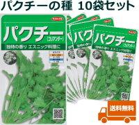 コリアンダー〜サカタのタネ★10袋セット