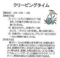 【ハーブの種】クリーピングタイム【藤田種子】多年草ほふく性