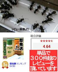 アリの群がる画像