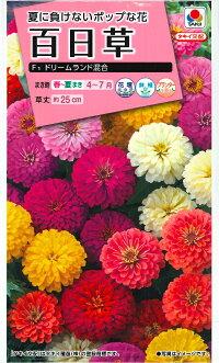【百日草(ジニア)】ドリームランド混合【タキイ種苗】