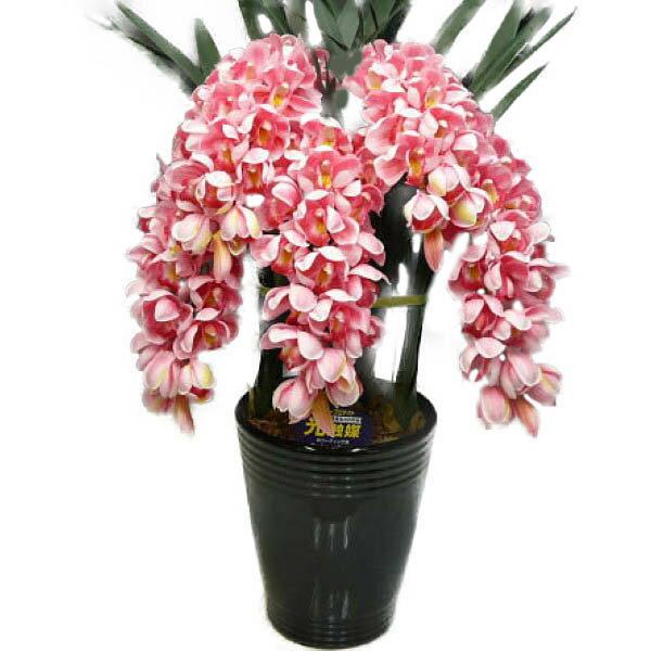 光触媒 造花 シンビジューム ピンク 5本立ち