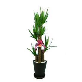 ユッカ エレファンティペス 8号鉢 黒丸鉢 受け皿付き セラアート鉢 白石マルチング 観葉植物
