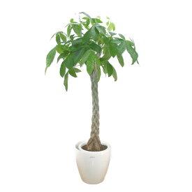 【個人宛配送不可】 観葉植物 パキラ(発財樹)10号鉢(尺鉢) ラスターポット