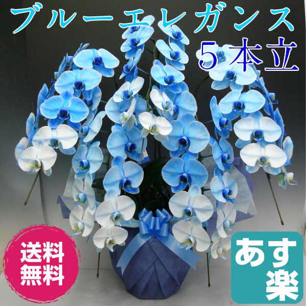 特殊な技術で染め上げた 胡蝶蘭 大輪 ブルーエレガンス 5本立ち【送料無料】