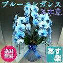 特殊な技術で染め上げた 胡蝶蘭 大輪 ブルーエレガンス 3本立ち【送料無料】