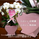 ハート胡蝶蘭 ミディタイプ 白 シングルハート ハート型陶器鉢【送料無料】