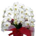 胡蝶蘭 大輪 白 3本立ち 27輪以上 選べる3色 花 ギフト