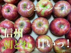 【信州産】朝どれ 味わい 無農薬りんご
