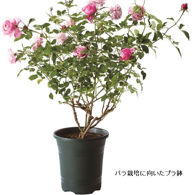 ローズガーデンポット24型(P8)【バラ・薔薇】 鉢 プラスチック 薔薇の植え込み