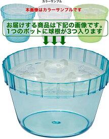 水栽ポットNo.4 【ヒヤシンス】【栽培】【球根】