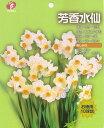 お徳用水仙「芳香水仙」10球入 球根【RCP】 05P03Dec16