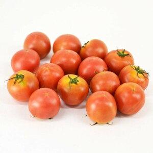 アメーラ(フルーツトマト)長野県 静岡県産 約1kg(サイズはA2S〜A2L程度)