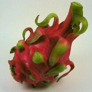 ドラゴンフルーツ(赤肉)
