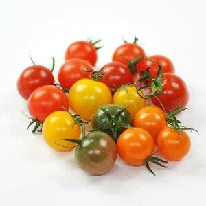 ミックスミニトマト