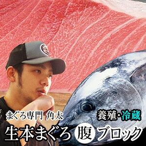 【生】国産本まぐろ 腹ブロック1.5kg【まぐろ】【マグロ】《冷蔵でお届けします。》【刺身】マグロ ブロック 生 本マグロ【北海道・九州・沖縄・離島はお届け不可】
