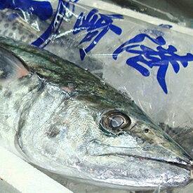【送料無料】サワラ 1尾(約3〜4kg)【上ものをお届けします】【北海道・九州・沖縄・離島はお届け不可】