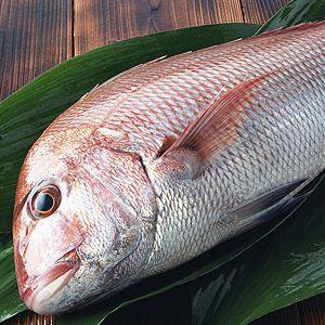魚屋の目利きが厳選!活〆真鯛(養殖)(【楽ギフ_包装選択】【楽ギフ_のし】