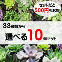 33種類から選べる 10個セット 多肉植物 寄せ植えに最適 セットがお得