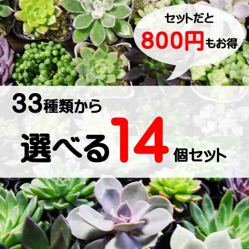 33種類から選べる 14個セット 多肉植物 寄せ植えに最適 セットがお得