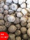 在来種 こんにゃく 種子 2年子 500g 【蒟蒻芋】