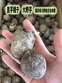 里芋種子 大野芋 1kg【里芋】【種芋】