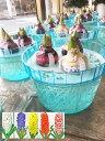 水耕栽培ヒヤシンス鉢 3色混合