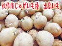【予約商品 長崎県産】 出島芋 秋じゃがいも種 1kg サイズ混合 【種芋】【秋ジャガイモ】【検品合格済】