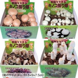 きのこ採り隊 家庭栽培 菌床栽培セット マッシュルーム きくらげ コプトリーヌ